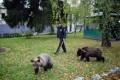 От ежат до медвежат