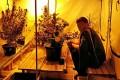 В квартире зеленоградца нашли теплицы с тремя килограммами марихуаны